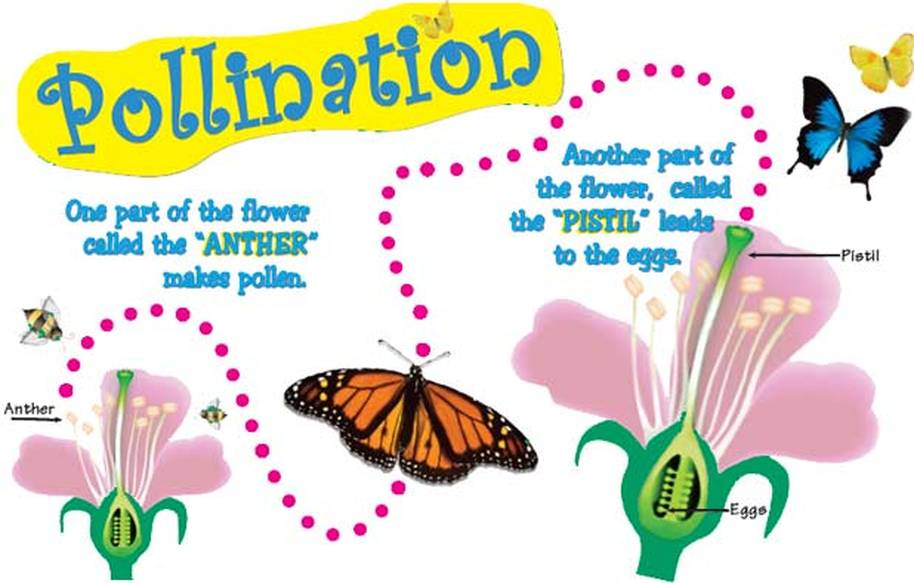 pollination project Welcome to polli:nation – a heritage lottery funded biodiversity and education project thank you to players of the national lottery for supporting this project.