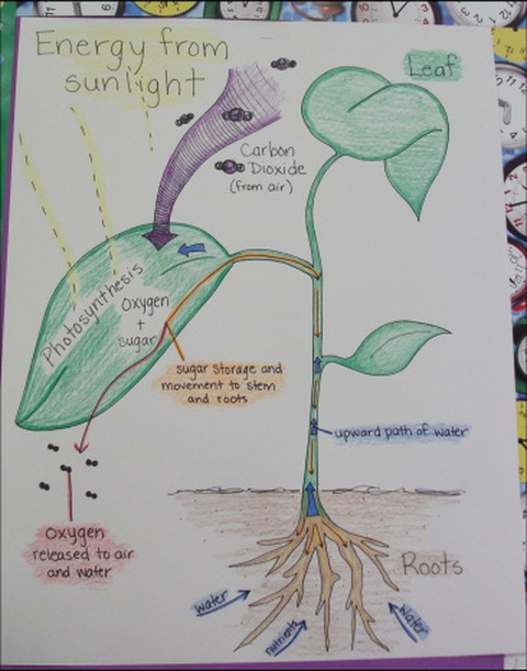 Photosynthesis poster ms a science online msascienceonline photosynthesis poster ccuart Gallery